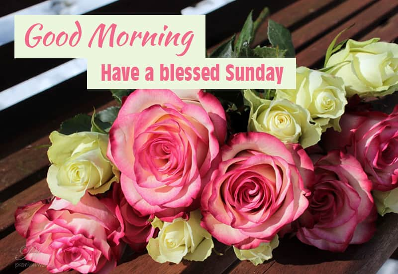 Good Morning Sunday Images For Whatsapp Facebook Premium Wishes