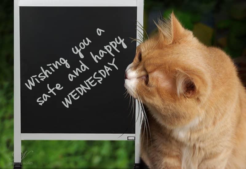 Stay Safe Happy Wednesday | Wednesday Wishes | Premium Wishes