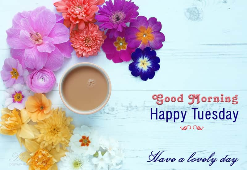Happy Tuesday Tuesday Wishes Premium Wishes
