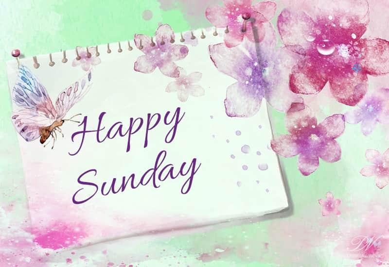 good morning friends happy sunday sunday wishes premium wishes