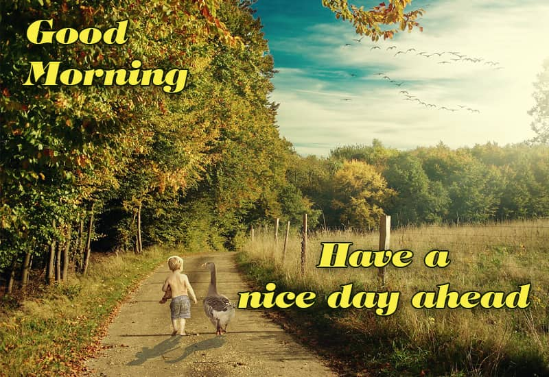 Good Morning Wishing You Have A Great Day Ahead Simply Good